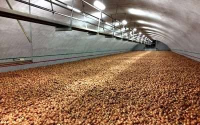 Successful Onion Storage Management in the Columbia Basin pt. 4/4