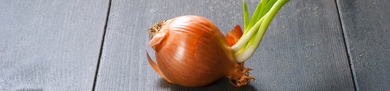 Suberizer BlogPost1 - Successful Onion Storage Management in the Columbia Basin pt. 1/4